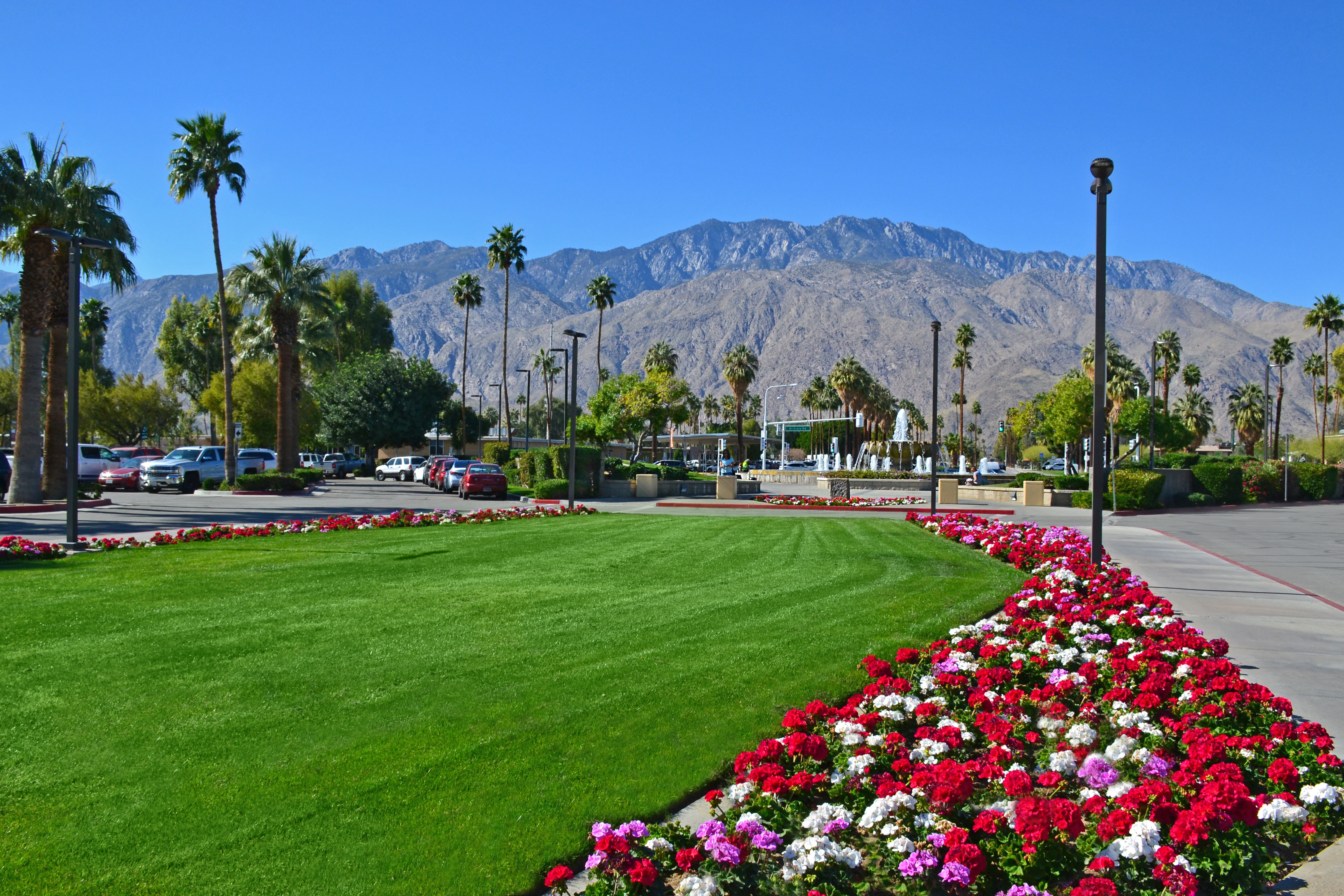 Palm Springs Airport Flowers Turf Mountains 0966 Mariposa